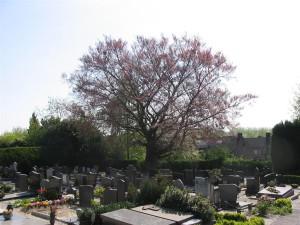 Begraafplaats Wilhelminastraat